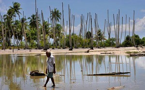 A former fresh water pond that now is flooded with sea water that is killing coconut trees and milk fish stocks, both vital parts of the local diet. Photo: Justin McManus/The Age