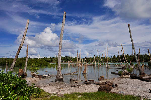 A former fresh water pond that now is flooded with sea water that is killing coconut trees and milk fish stocks, both vital parts of the local diet. Photo: Justin McManus, The Age